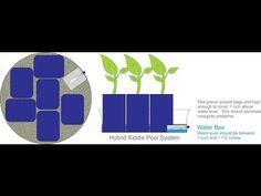 The Self Watering Hybrid Kiddie Pool Grow System.