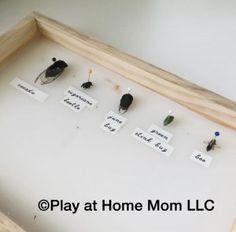 Project based homeschooling is a way to ensure that children will take charge of their own education and gain essential skills. Bug Activities, Stink Bugs, Child And Child, Learning Through Play, Life Science, Education, Mom, 5 Years, Children