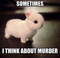 Dump A Day Funny Pictures Of The Day - 83 Pics It's funny because this bunny is my pinterest profile picture at the time