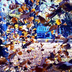 Bunte tanzende Blätter.