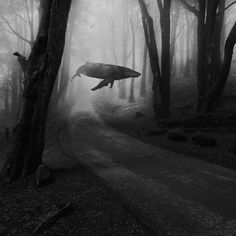 Idk but I like this (this is the source I have dont k is artist or anything like that) Space Whale, Dark Paintings, Whale Art, Photoshop, Arte Horror, Blue Whale, Foto Art, Jolie Photo, Surreal Art