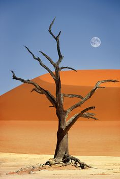 Dead tree in Deadvlei, red sand dunes in Sossusvlei, Namib Desert, Namib-Naukluft National Park, Namibia by Dietmar Temps