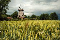 Wiatrak typu holenderskiego w Palczewie, Polska. A Dutch windmill in Palczewo, Vistula Delta, Poland.Phto by Grażyna Saniuk