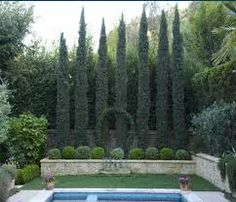 Image result for cypress trees at driveway entrance