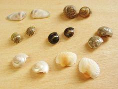 Make This - SeashellEarrings - Luxe DIY - How Did You Make This?