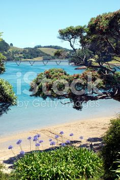 Pataua Estuary, Whangarei District, Northland, New Zealand royalty-free stock photo African Lily, Agapanthus, Image Now, Summer Days, New Zealand, Royalty Free Stock Photos