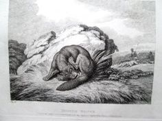 3. Howitt, Samuel 1810 Four original engravings/etchings: Dog, Cock and Fox; Hunted Beaver; The Eagle, & Assembly of Animals; Sheep and Hunted Wolf book