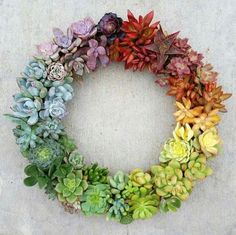 Rainbow Succulent Wreath--inspiration for Stampin up succulents dies