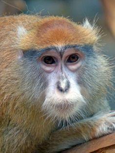 Singe / Monkey zoo granby