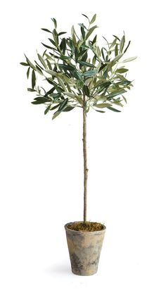 Features:  -Interior use only dust with dry cloth .  -Avoid moisture and direct sunlight.  Product Type: -Tree.  Orientation: -Floor.  Base Included: -Yes.  Plant Color: -Green.  Base Color: -Gray and