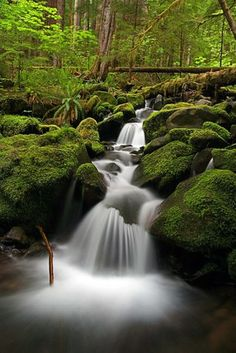 Creek on Sol Duc Trail, Olympic National Park, Washington.
