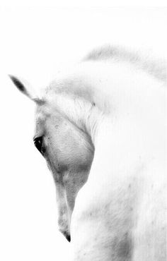 horse photography / color inspiration / black and white / monochromatic / texture / pattern / nature / art /