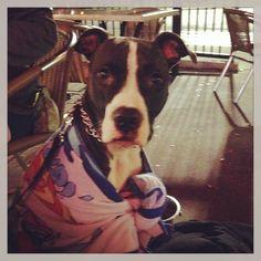 [Photo Credit: @cristel_lucia via Instagram] #dog #TijuanaFlats #TexMex