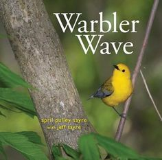 (Simon & Schuster) Warbler Wave Discover the magic—and the science—behind the migration of warblers with this stunning photographic picture book from the award-winning author and photographer of Raindrops Roll, Best in Snow, and Full of Fall.   The migrating warblers have arrived, to feed and preen, to refuel and rest before continuing on their amazing journey of thousands of miles. This photographic picture book captures in lush detail the story of these tiny, colorful, and diverse birds.