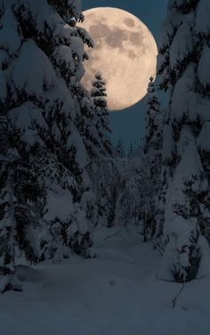 Super moon over a snowy forest