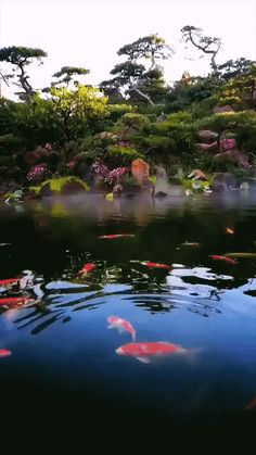 Beautiful Flowers Images, Beautiful Gif, Flower Images, Beautiful Roses, Animals Beautiful, Glitter Wallpaper, Wallpaper Backgrounds, Koi Pond Design, Good Morning Nature