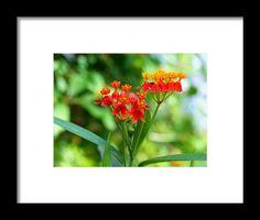 orange, macro, bokeh, flower, nature, michiale schneider photography