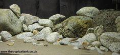 Rock to sand transition Biotope Aquarium, Cichlid Aquarium, Nano Aquarium, Diy Aquarium, Glass Aquarium, Aquarium Decorations, Aquarium Ideas, Malawi Cichlids, African Cichlids