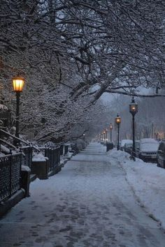 Christmas snow winter lights cold beautiful trees alone cars street silence city Magic evening new york silly-luv Winter Szenen, Winter Love, Winter Magic, Winter Photography, Nature Photography, Snow Scenes, Winter Pictures, Winter Beauty, Jolie Photo
