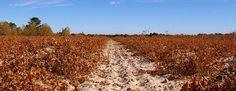 Spain | Wine regions | JancisRobinson.com