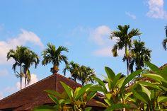 3/6(月)バリ島ウブドのお天気は晴れ。室内温度31.0℃、湿度62%。暑い日が続いています。季節の変わり目はジリジリと暑いっ!しばらく続くかもしれませんねー。