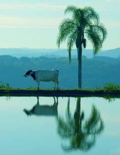 Rio Grande do Sul Brasil