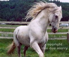 Andalusian Horses because of their light color their skin can be sensitive to the sun.