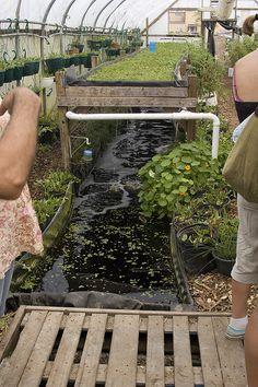 Biogarden 4-4 Aluminum Aquaponics System