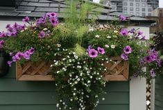window box plants for shade - Google Search