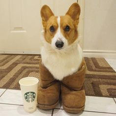 Basic Corgi | The 40 Most Important Corgis Of 2015
