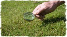 Koszenie trawników, trawy. Kondycja trawnika - zadbaj o niego.