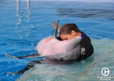 Winter the Dolphin! Winter and her trainer spending some quality time together. Aren't they adorable! Orcas, Dolphin Trainer, Clearwater Marine Aquarium, Dolphin Tale, Water Animals, Underwater Creatures, Marine Biology, Sea World, Ocean Life