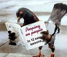 """Wat lezen dieren zoal? Deze duif een """"how to"""" over een van zijn hobby's... *"""