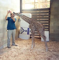 This would only be the best job ever. Zoo vet <3 :)