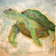 turtle, tartaruga, watercolor, illustration, draw, sea