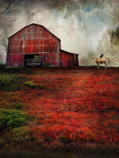 Scarlet Pastures by Distressed Jewell, via Flickr