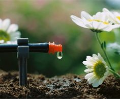 Efficient and water-saving drip irrigation