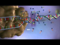 From DNA to protein - 3D - YouTube