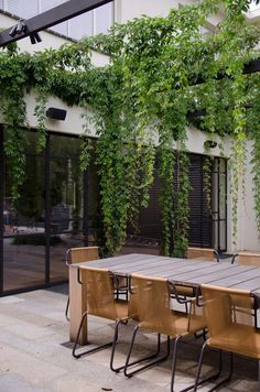 Greenery hanging from steel pergola over entertaining area
