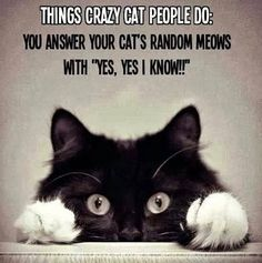 Things Crazy Cat People Do.  I tried to bypass this as totally irrelevant to me, but I have to confess....