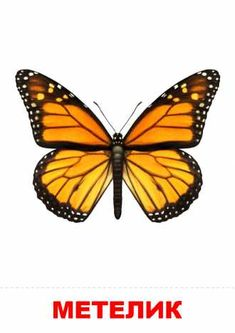 Purchase Monarch Butterfly Open Wings in Top View As Flying Wall Art Hanging Tapestry inch from Ann Pekin Pekin on OpenSky. Butterfly Wall Art, Monarch Butterfly, Hanging Tapestry, Hanging Wall Art, Wall Hangings, Develop Pictures, Open Wings, Clipart Black And White, Beginner Painting
