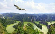 Griffon Vultures flying above Uvac River Canyon in south-western Serbia