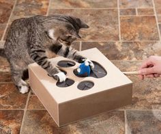 25 Affordable Products You Didn't Know You Needed For Your Cat