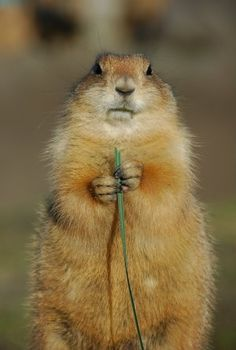 sure miss seeing the adorable prairie dogs on my way to work in CO