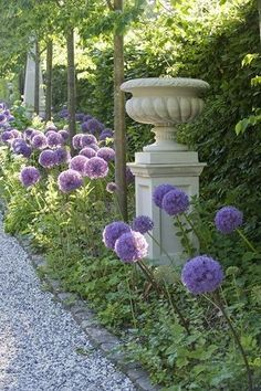 Giant alliums and urn on pedestal.