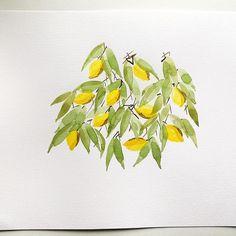 marinamuse @marinamusestudio graphic design lemon tree #watercolor #graphicdesign #fashiondesign #illustrator Old School, Illustrator, Lemon, Watercolor, Graphic Design, Detail, How To Make, Fashion Design, Instagram