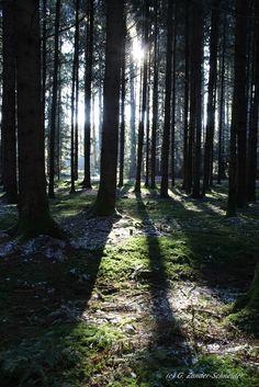 01. Dezember Advent war ursprünglich die stillste Zeit im Jahr. Davon ist heutzutage kaum noch etwas zu spüren. Ein Spaziergang im Winterwald lässt uns diese Stille wieder erleben. http://www.apfelkuchen-fuer-die-seele.de/blog.html