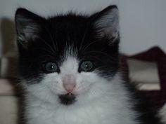 Teo, il gattino che ho regalato miei nipoti