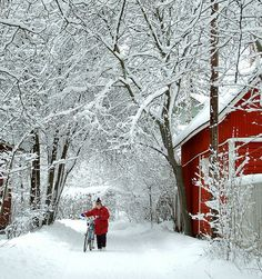 I will be dressing my family in red all winter waiting for that first big snow in hopes of getting a picture as pretty as this.