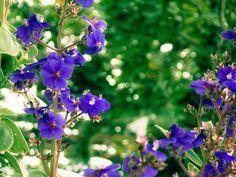 Flores 5 | por osoriotrujillo